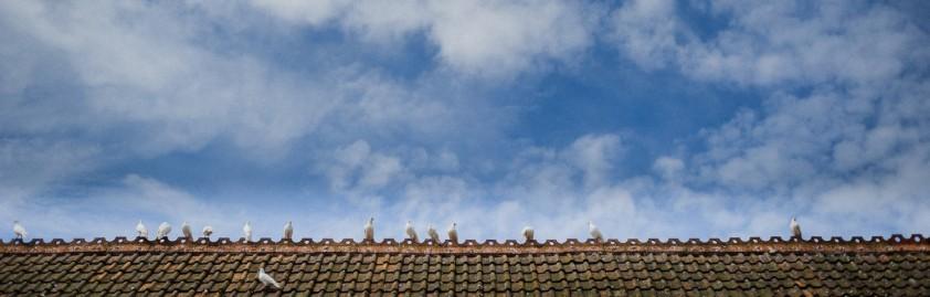 birds_cropped.jpg